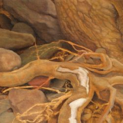 Catherine Lucas Oil sketch of roots and rocks