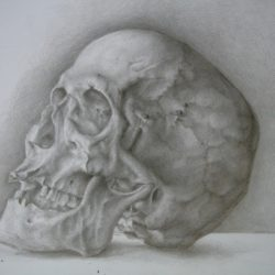 Catherine Lucas silverpoint drawing of skull